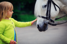 Equine Therapy Horse Therapy in Massachusetts (2)